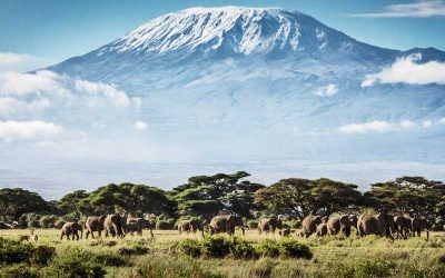 AMBOSELI SAFARI- 3 days
