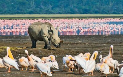 LAKE NAKURU SAFARI – 2 days