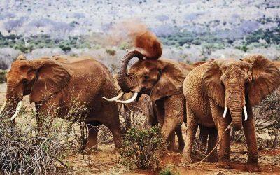 RED ELEPHANT SAFARI – 4 days