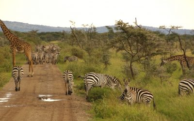 KENYA AND TANZANIA JUMBO TRAIL – 10 days