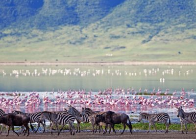 ngorongoro-crater-floor-teaming-with-game-1600x900