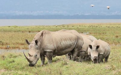 TSAVO EAST, AMBOSELI AND TSAVO WEST SAFARI –  4 days