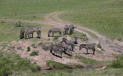 MAASAI MARA AIR CLASSIC SAFARI – 3 days