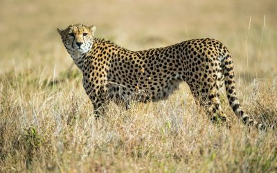KENYA EXPRESS SAFARI – 6 days