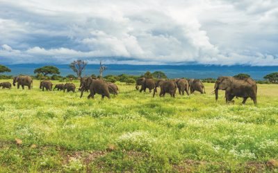 AMBOSELI, TSAVO WEST, VOYAGER ZIWANI AND TSAVO EAST SAFARI – 5 days