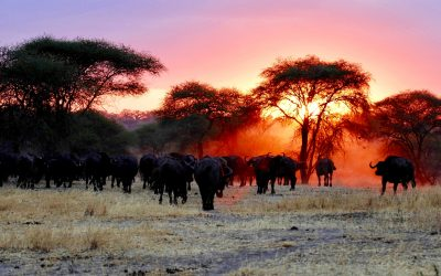 KENYA AND TANZANIA EXPRESS – 7 days
