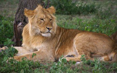 KENYA – TANZANIA ADVENTURE SAFARI – 8 days
