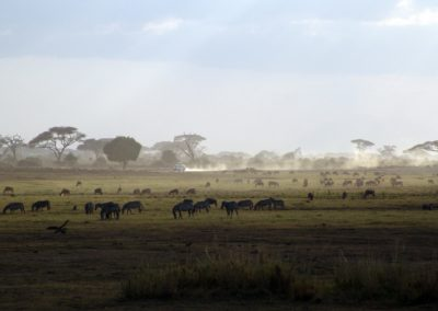safari-1029079
